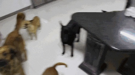 Какая-то неправильная собака