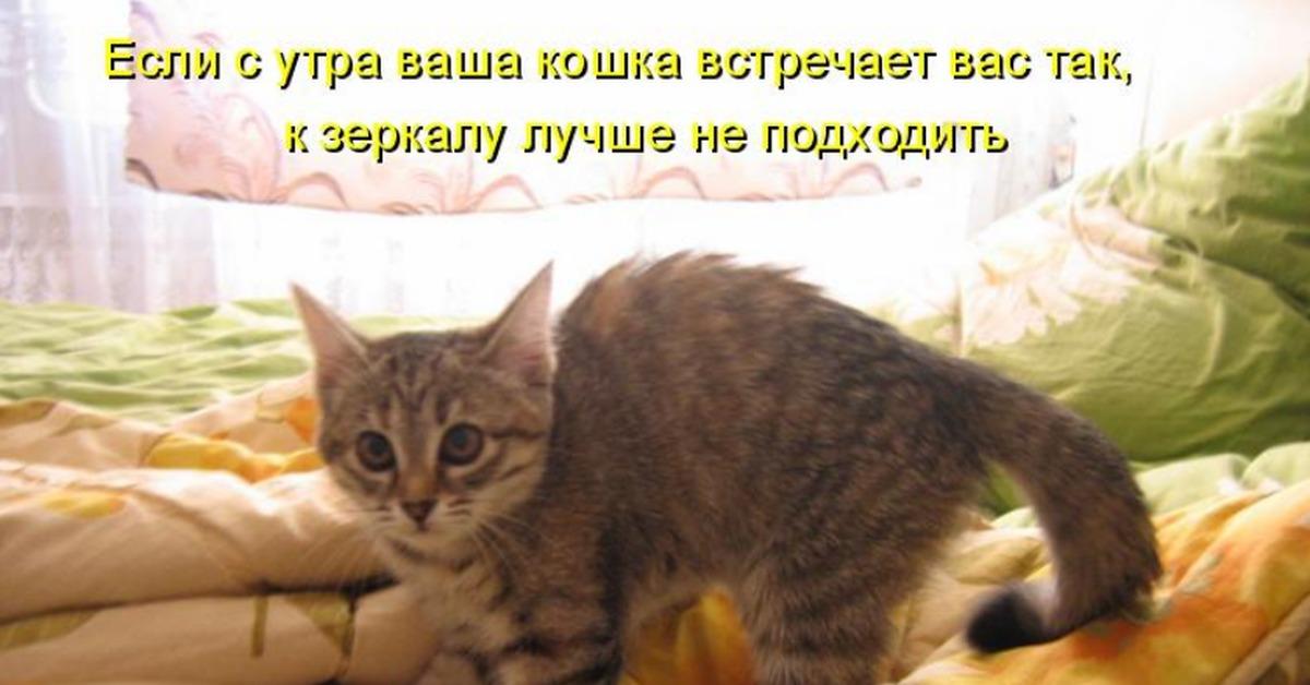 С добрым утром прикольные картинки с кошками с подписями, сделать моим фото
