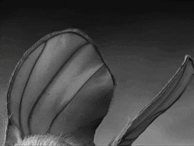 Муха под микроскопом Муха, Фасеточный глаз, Микроскоп, Увеличение, Интересное, Необычное, Zoom_journey, Гифка