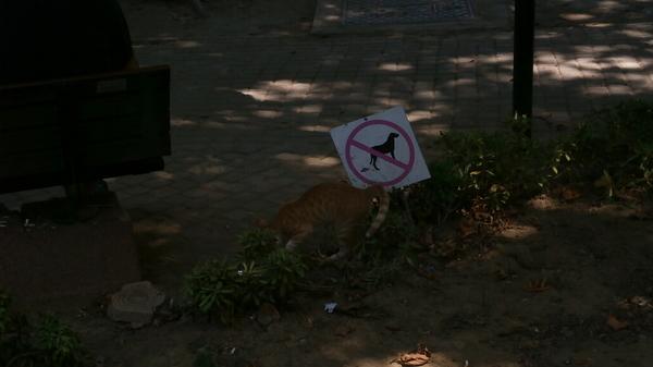 Собакам нельзя а кошкам можно, дискриминация в Турции =)  P.s. Возможно всё потому что собака чёрная =Р Наглый, Кот, Срёт, Турция