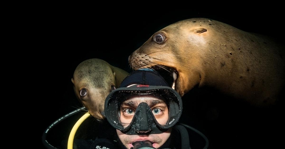аквалангисты картинки смешные двое суток его