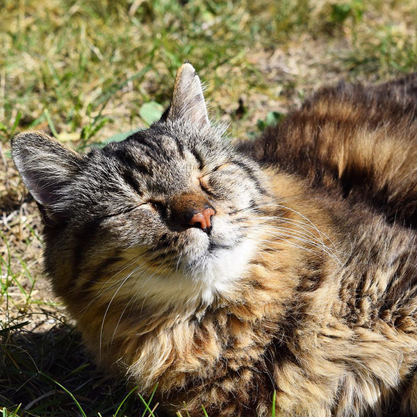 Возраст котов переведенный на человеческий