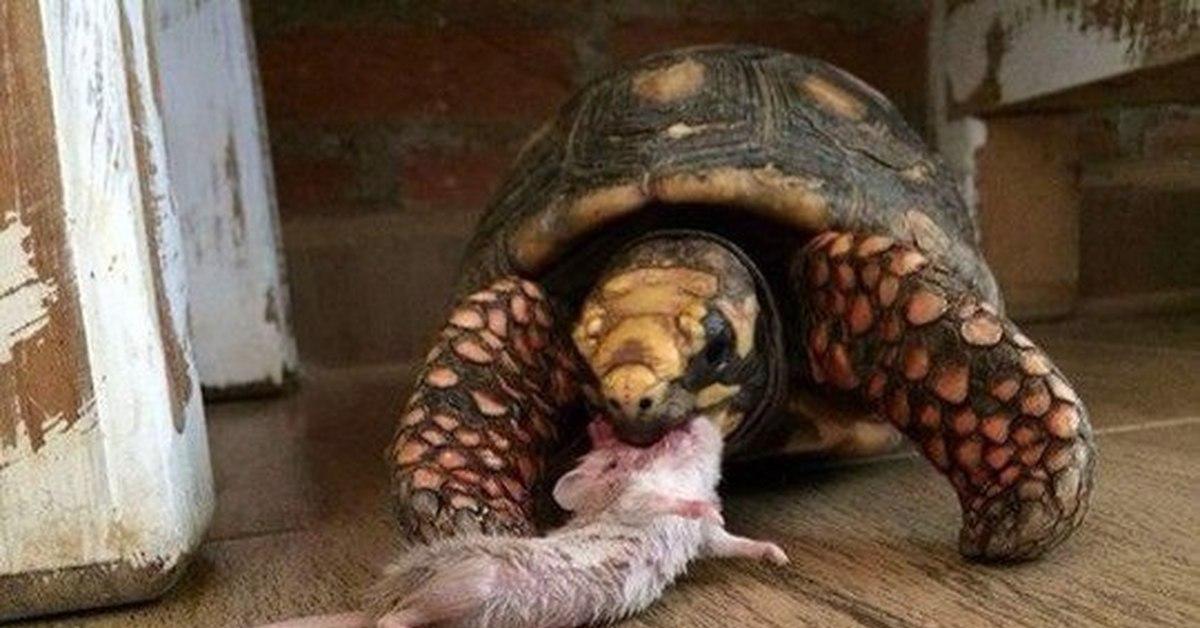 Поскользнулась на черепахе