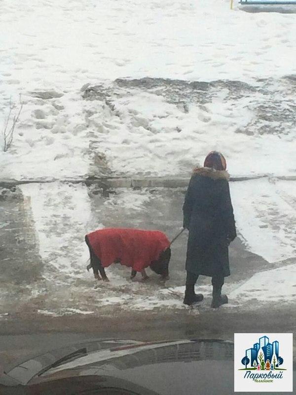 Семья из Челябинска завела кабанчика Кабан, Челябинск, Парки и зоны отдыха, Длиннопост