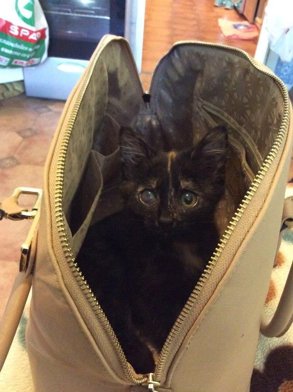История одного котёнка кот, лечение, общество, милота, длиннопост