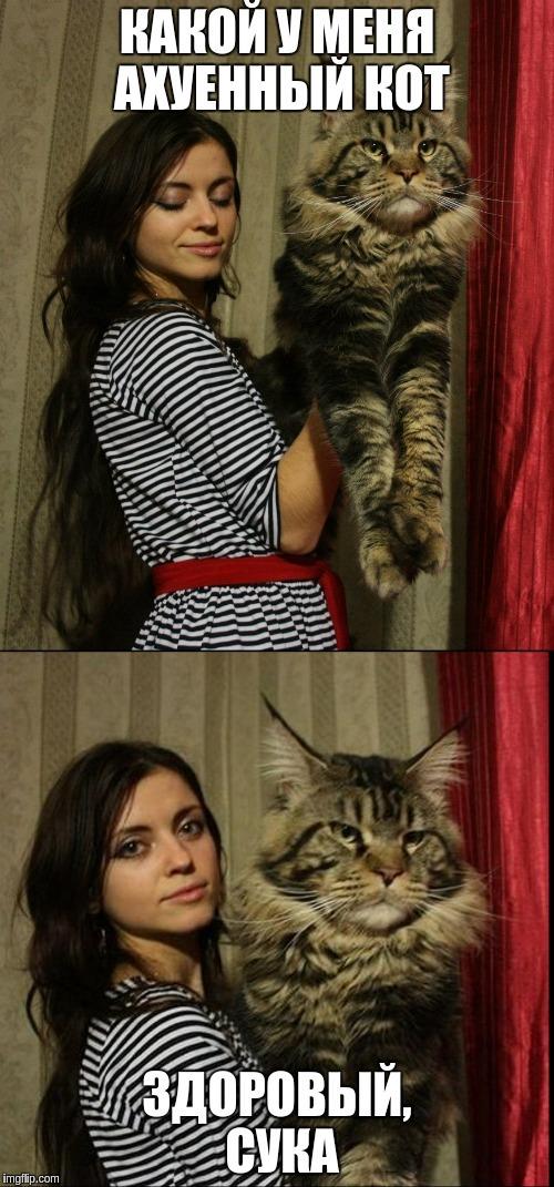 Здоровый котяра Кот, Мейн-Кун