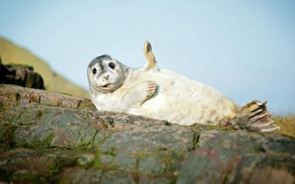 Самые смешные фотографии животных 2015 года Животные, Фото, Фотоконкурс, Длиннопост