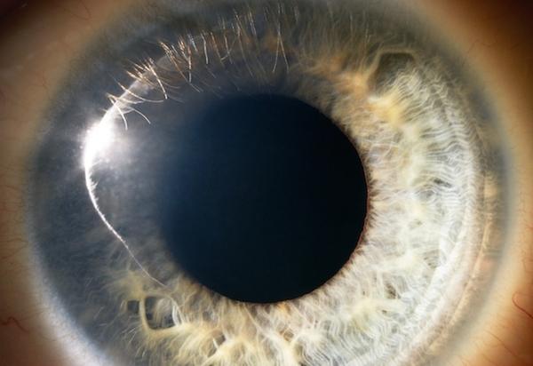 Прорыв в исследовании стволовых клеток: учёные смогут выращивать новые человеческие глаза Наука, Стволовые клетки, Прорыв