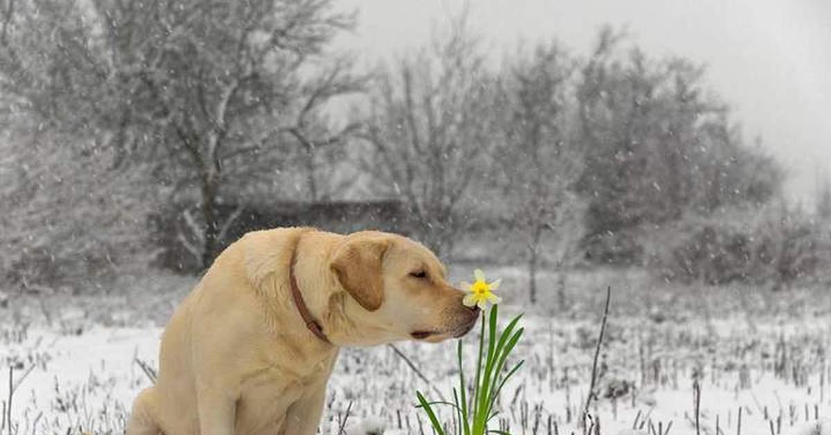 начало весны прикольные фото картинки получились