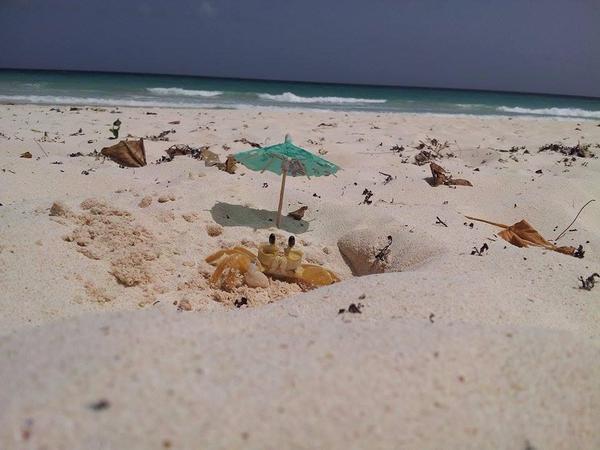 Он лежал так в течении 20 минут в ожидании краба. Но оно того стоило :) фотография, краб, пляж, милота, песок