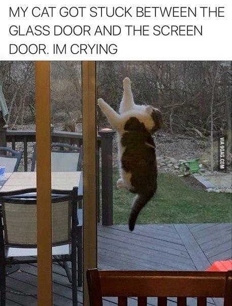 inside cat door