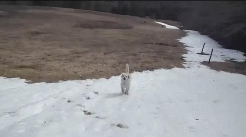 Когда осталось еще немного снега и есть возможность прокатится) Собака, Снег, Покатушки, Гифка