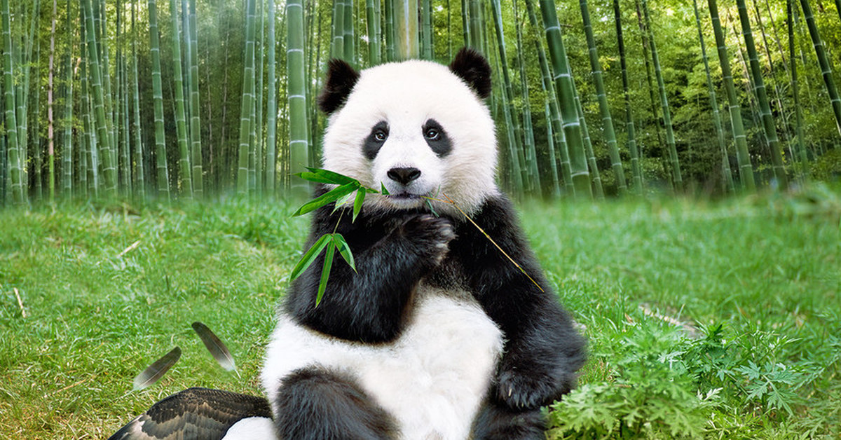 Китай картинки животных
