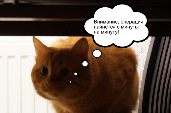 Лига спецназа Кот, Картинки, Комиксы, Длиннопост