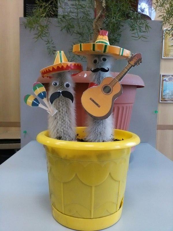 Диего и Хосе Кактус, Мексика, Аррива, Собмреро, Гитара, Маракасы