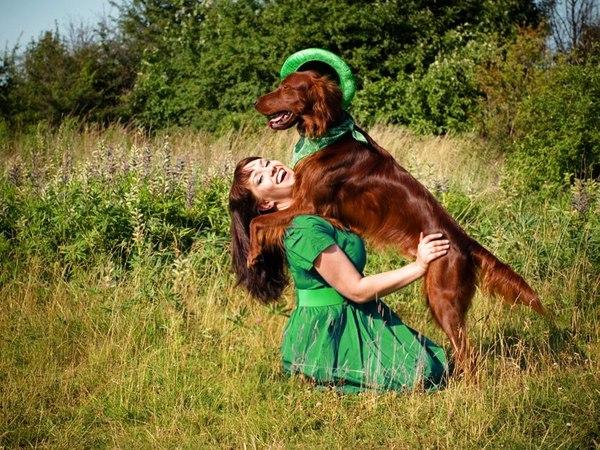 Erin go Bragh! Собака, Ирландцы, Ирландский сеттер, День святого патрика, Длиннопост