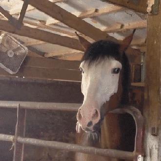 Лошади тоже любят подурачиться