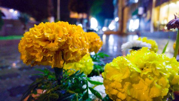 В Ташкенте дождливая погода Дождь, Фото, Цветы