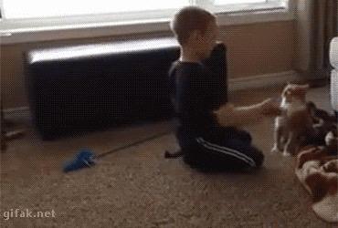 Не шути с котом