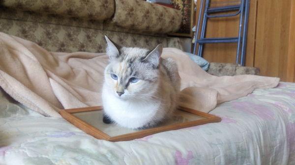 Еще одна ловушка для кота Кот, Ловушка, Рамка