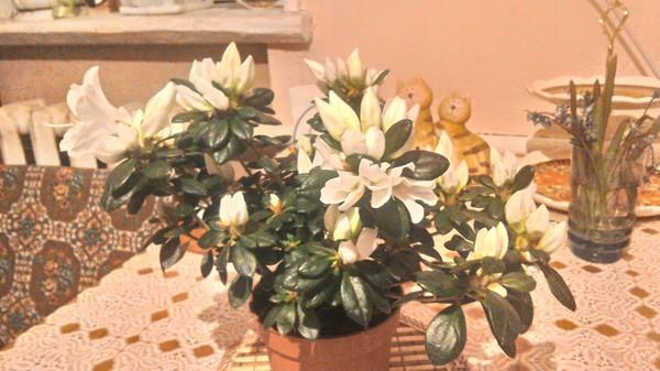 Лига флористов/ботановедов помогите опознать растение растения, вопрос
