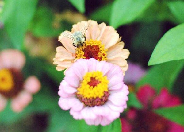 Никакой смысловой нагрузки...Просто пчела (или шмель) :)