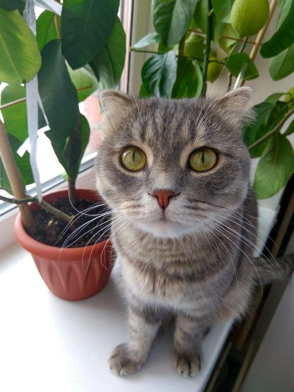 Моя котейка :3