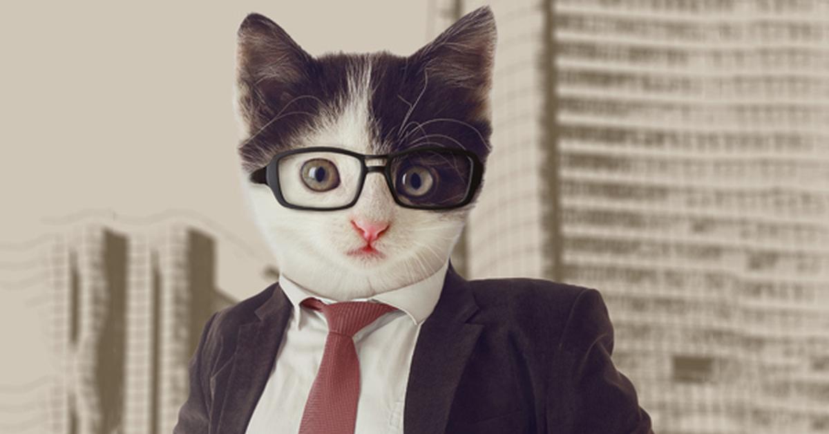 Картинки коты бизнесмены