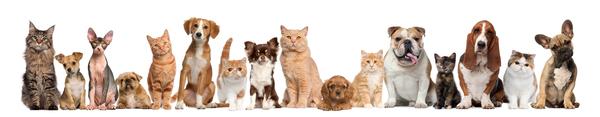 Когда вы уходите на работу кот, собака, разлука, разница восприятия, подсмотрено у ilyavaliev