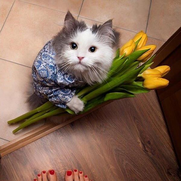 Cat weezel