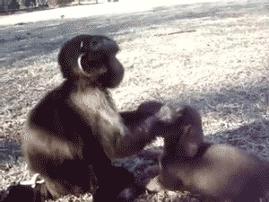 Мимимишки-обнимашки