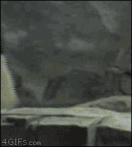 Панды бегут из зоопарка