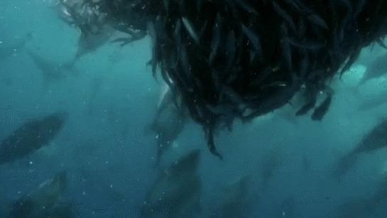 Синий кит трахает видео