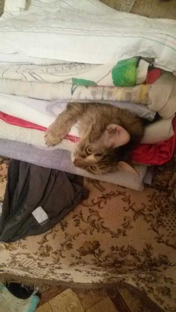 Кошка намекает на то чтобы ее погладили