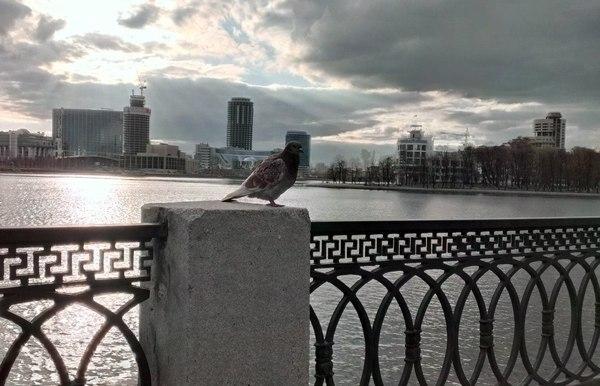 Величественный птиц в HDR, HTC One S