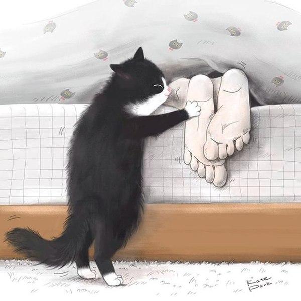 Из жизни кота