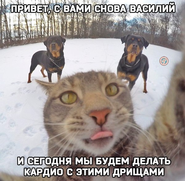 YouTube канал кота Василия))