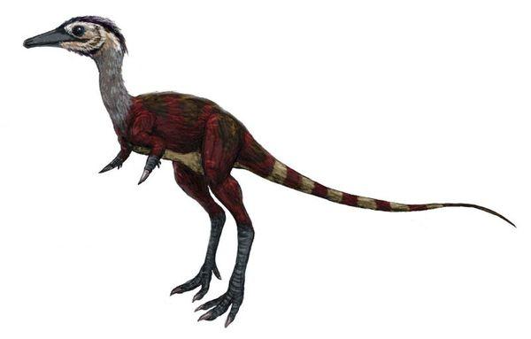 Shuvuuia Палеонтология, Extinct_animals, Chordata, Reptilia, Dinosauria, Shuvuuia, Мел, Длиннопост