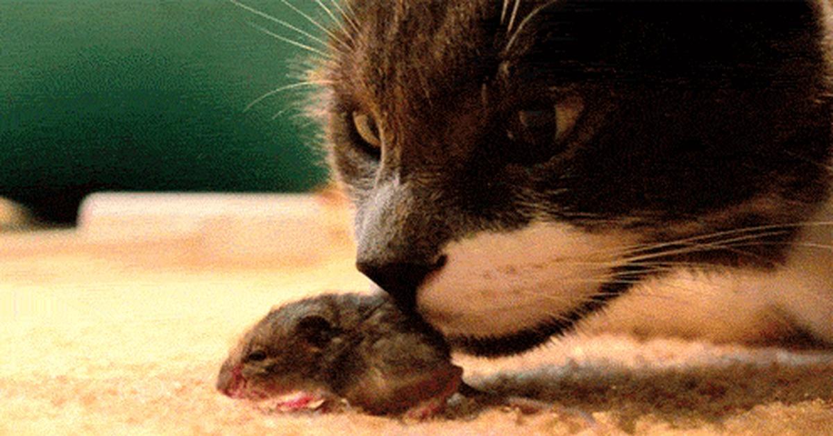 Кот и мышь гифки