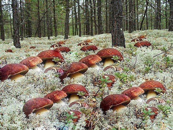 Большие грибы своими руками