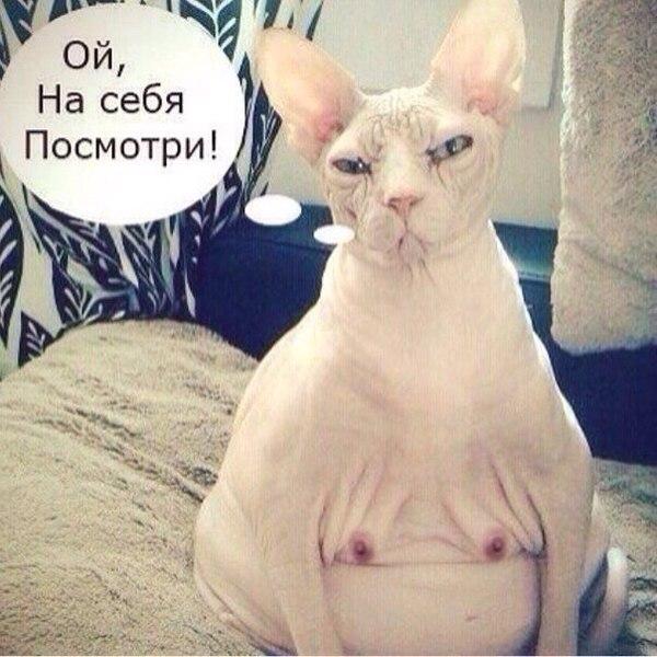 Признаки заболевшей кошки kotodomru
