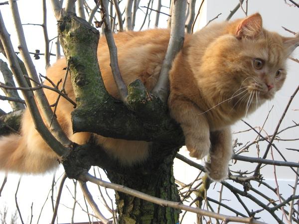 Вот и у меня коты к весне прилетели Кот, Весна, Моё, Длиннопост