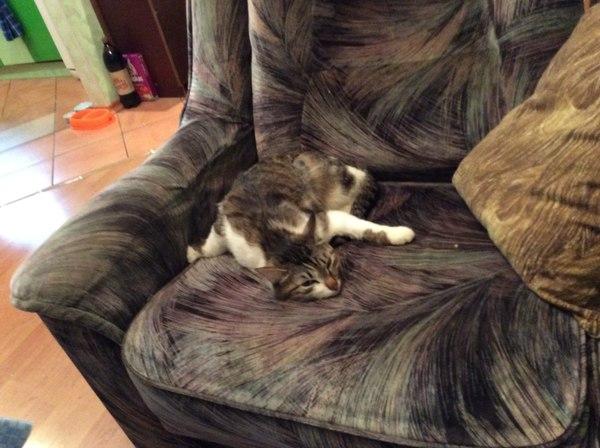 И еще раз об удобных позах...) Удобство, Кот