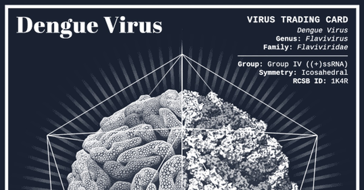 dengue virus research paper International journal of scientific and research publications, volume 5, issue 3, march 2015 2 issn 2250-3153 first epidemic of dengue hemorrhagic fever was reported in karachi 1994 [15-17.