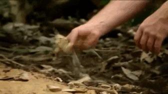 Совершенно ручной комодский варан из Лондонского зоопарка Варан, Комодский варан, Ящерица, Террариумистика, Зоопарк, Пресмыкающиеся, Животные, Милота, Гифка