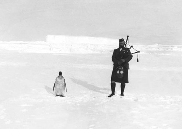 Когда пришел на работу... пингвины, непонятки, что тут происходит, шотландец, килт, южный полюс, волынка, надежда человечества