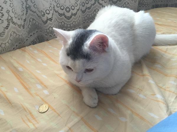 Проснулся утром, а кот за аренду принес.