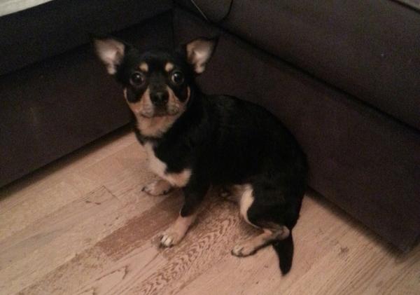 Поднимите пожалуйста в топ! Найдена собака спб. Лига Добра, Лига помощи, Найденыш, Найдена собака, Санкт-Петербург, Собака, Помощь