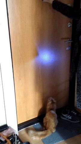 Кошка открывает глазок Кот, Дверь, Дверной глазок, Гифка