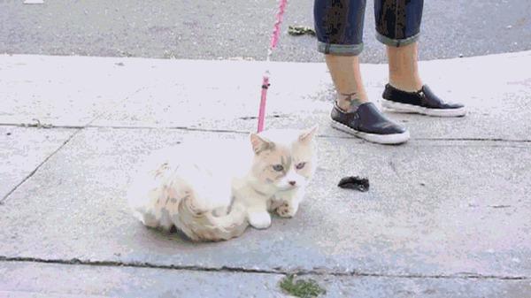 female tom cat